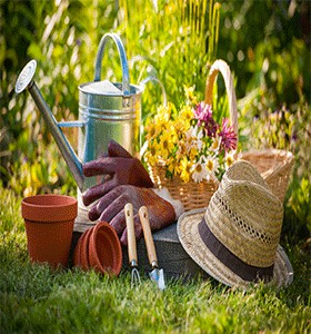 GARDENING FLOWERS And PLANTS Abd NURSERY TREES